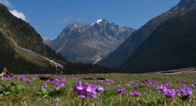yumthang-valley-flower-image